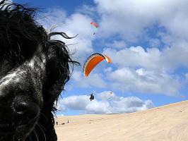 Flugschulhund Xaver an der Dune de Pyla
